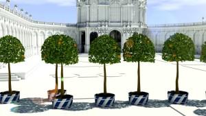 Orangenbäume im Zwinger